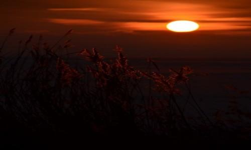 POLSKA / Zachodniopomorski / Zalew Szczeciński - Woliński Park Narodowy / Trzciny w promieniach zachodzacego słońca