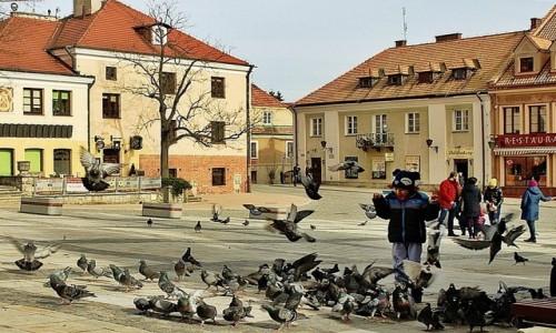 Zdjecie POLSKA / woj. świętokrzyskie / Sandomierz / Nauka latania