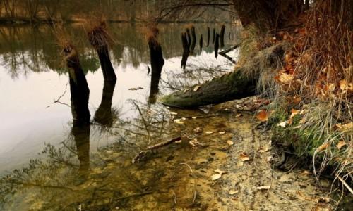 Zdjęcie POLSKA / Bory Tucholskie / Dolina Brdy / Uroki polskich rzek-Dolina Brdy