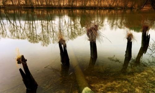 Zdjęcie POLSKA / Bory Tucholskie / Dolina Brdy /  Tęsknota za wiosną!