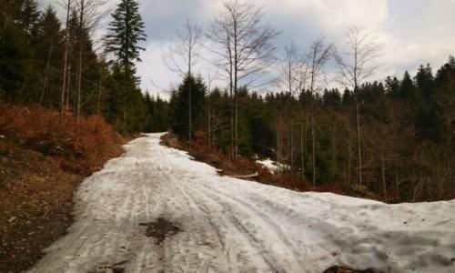 POLSKA / Beskid Żywiecki / Las Złotnice / Droga ze Złatnej