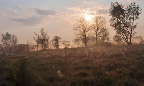 Zdjęcie POLSKA / Mazowsze / okolice Jeziorzan / Wczesnym rankiem