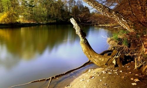 Zdjęcie POLSKA / Bory Tycholskie / Dolina Brdy / Wzdłuż rzeki...