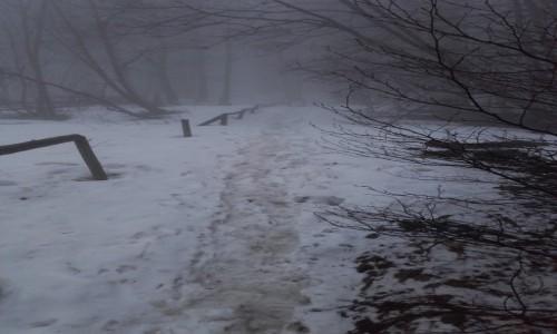 Zdjęcie POLSKA / Bieszczady / Mała Rawka / Wiosenne przecieranie szlaku