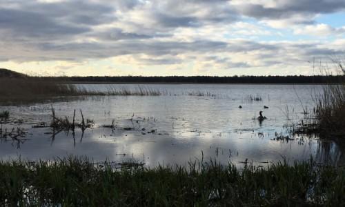 Zdjecie POLSKA / Pomorze / Nowecin / Jezioro Sarbsko