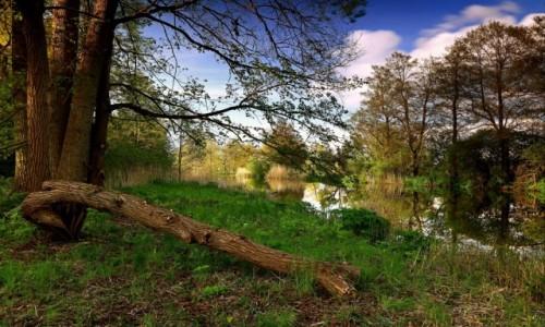 Zdjęcie POLSKA / pow-żniński / Nadnoteckie łęgi / Nad brzegiem rzeki-2