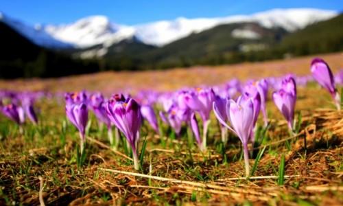 Zdjęcie POLSKA / Tatry / Dolina Chochołowska / Gdy pierwszy kwietnia żartuje z maja