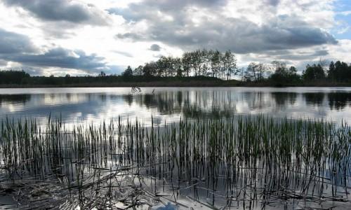 Zdjęcie POLSKA / Kotlina Sandomierska / Rezerwat przyrody