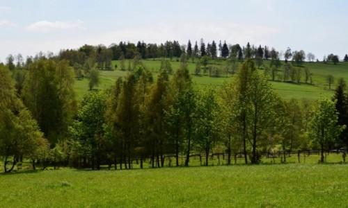 Zdjęcie POLSKA / Śnieżnicki Park Krajobrazowy / Kletno / sudecki maj...