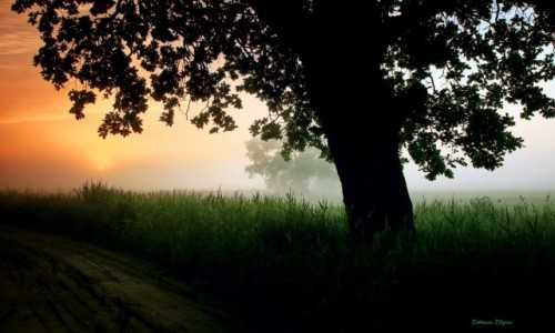 Zdjęcie POLSKA / Pow.Żniński / Nadnoteckie łęgi / Czerwcowe mgły