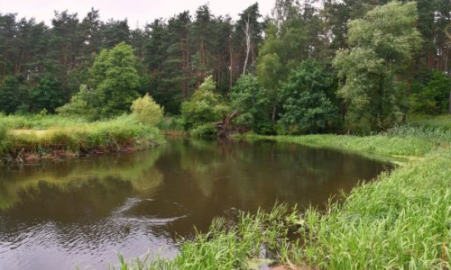 Zdjęcie POLSKA / województwo kujawsko-pomorskie / pomiędzy Brodnicą a Golubiem Dobrzyniem / Zakole rzeki pod lasem