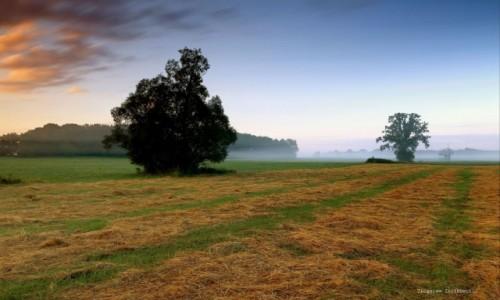 Zdjęcie POLSKA / pow-żniński / Nadnoteckie łęgi / Zapach skoszonej trawy.