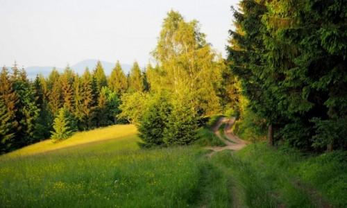 Zdjęcie POLSKA / Dolny Śląsk / Rudawski Park Krajobrazowy / w stronę Skalnika...