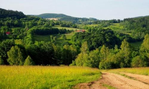 Zdjecie POLSKA / Dolny Śląsk / Rudawski Park Krajobrazowy, szlak na Ostrą Małą / rozświetlona słońcem...