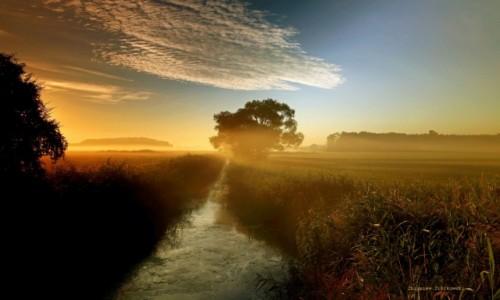 Zdjecie POLSKA / pow-żniński / Dolina Noteci / Przedzierają się przez mgłę