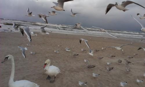 POLSKA / - / Plaża w Świnoujściu / Świnoujście
