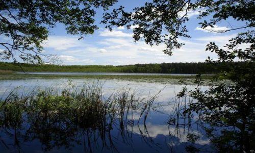 Zdjecie POLSKA / Polesie Lubelskie / Sobiborski Park Krajobrazowy / Jezioro Wspólne
