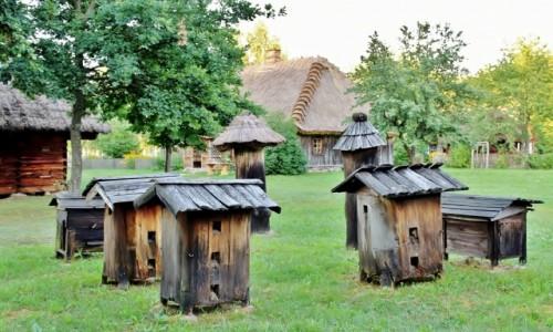 Zdjęcie POLSKA / województwo podlaskie / Wasilków / Ule
