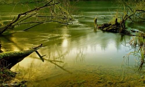 Zdjęcie POLSKA / Bory Tucholskie / Dolina Brdy / W Dolinie Brdy