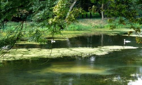 Zdjęcie POLSKA / kolski / Kościelec / Na stawie w parku