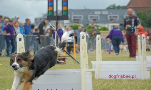 Zdjęcie POLSKA / Tczew / plac nad Wsłą / FLyball - zawody psiaków