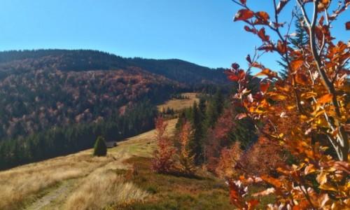 Zdjęcie POLSKA / Gorce / w drodze na Kudłoń / jesień w Gorcach