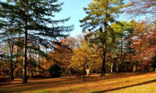 Zdjęcie POLSKA / dolnoślaskie / Lądek Zdrój / Jesień idzie przez park