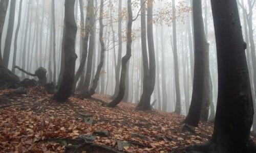 Zdjecie POLSKA / Bieszczady / Szlak na Rawki / magiczny las