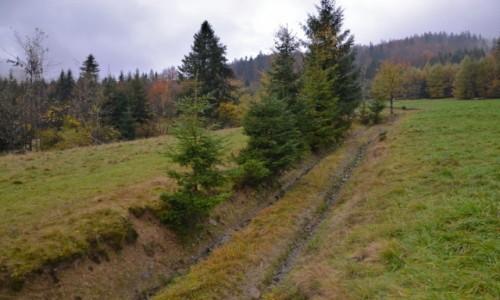 Zdjecie POLSKA / Beskid Żywiecki / Przysłop / Beskidzka jesień