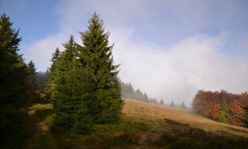 Zdjęcie POLSKA / Beskid Żywiecki / Rycerzowa / Beskidzka jesień
