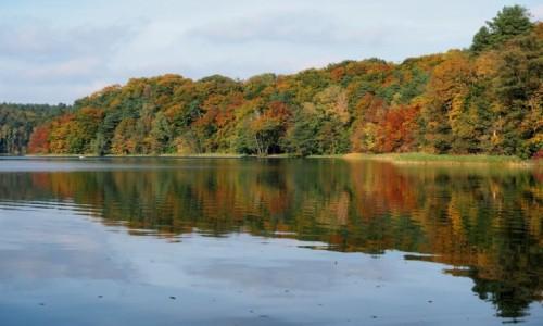 Zdjecie POLSKA / Lubuskie / Jezioro Trześniowskie / barwne liście, ostatki zieleni...
