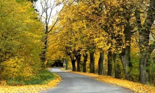 Zdjęcie POLSKA / dolnoślaskie / Lądek Zdrój / Jesienna droga, na przełęczy lądeckiej