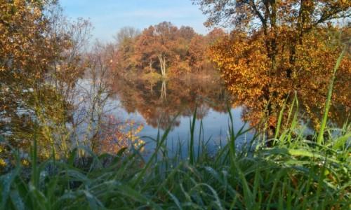 Zdjęcie POLSKA / spytkowice / dolina karpia / kolory jesieni,,,