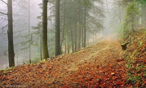 Zdjęcie POLSKA / Beskidu Niskiego / Krynica Górska / Dzisiaj ponownie mgły!