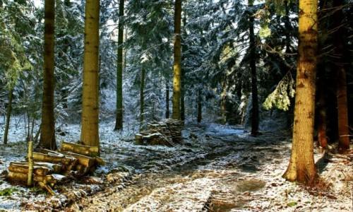 Zdjęcie POLSKA / Beskidu Niskiego / Tylicz / Zima zagościła na dobre