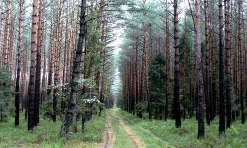 Zdjęcie POLSKA / opolskie / Smolarnia / Smutny jesienny las