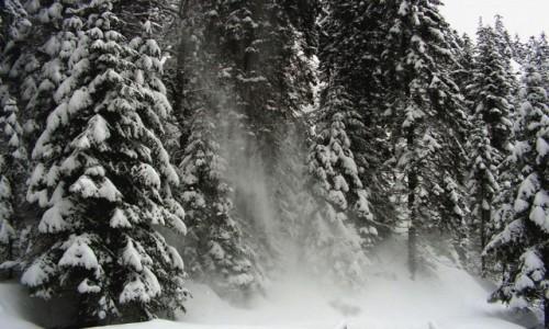 Zdjecie POLSKA / Tatry / Dolina Kościeliska / Tatry zimą