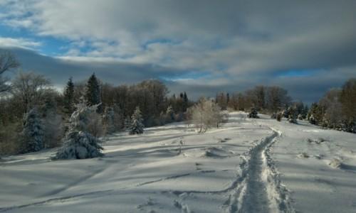 Zdjęcie POLSKA / beskid śląski / w drodze na Błatnią / droga na szczyt