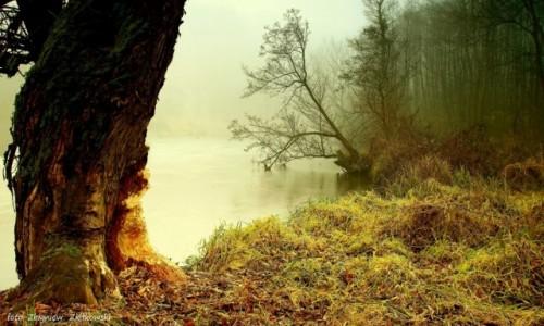 Zdjecie POLSKA / Bory Tucholskie / Dolina Brdy / Obraz tworzony przez bobry