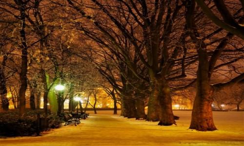 Zdjęcie POLSKA / Wielkopolska / Poznań / nocą...