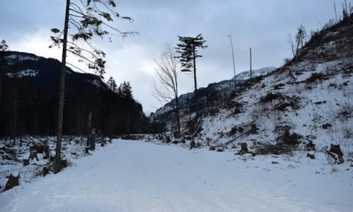 Zdjecie POLSKA / Tatry Zachodnie / Dolina Kościeliska / Tatry
