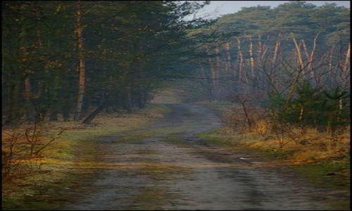 Zdjęcie POLSKA / woj.Opolskie / las / mgła 1