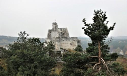 Zdjecie POLSKA / Jura / Scieżka między Bobolicami a Mirowem / Mirów za chaszczami i drzewami ;)