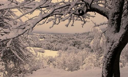 Zdjęcie POLSKA / Podkarpacie / Odrzykoń / Zimowe okno