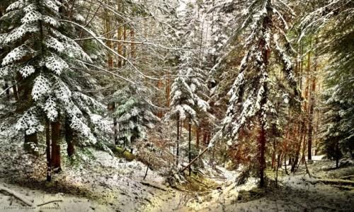 Zdjecie POLSKA / Beskid Sądecki / Tylicz / Beskidy zimą