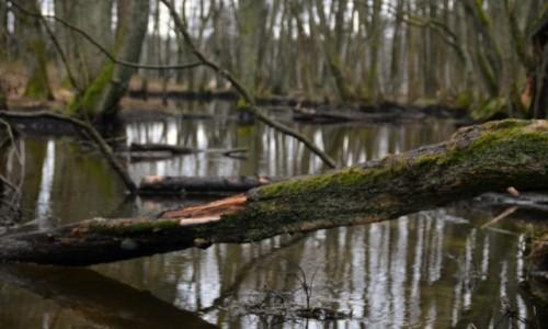 Zdjecie POLSKA / Park Narodowy Borów Tucholskich / Jezioro Gółwka / Lód i brzoza