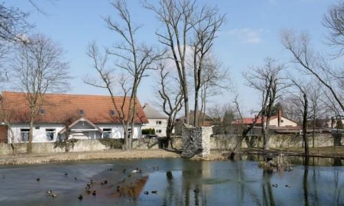 Zdjęcie POLSKA / opolskie / Kamień Śląski / Kaczuchy na stawie pałacowym