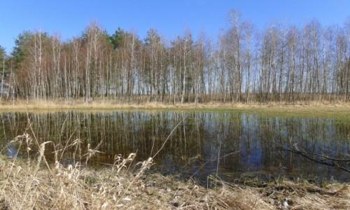 Zdjecie POLSKA / Podlasie / dolina Biebrzy. / Przyszła wiosna na Podlasie :)