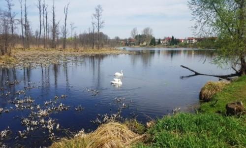 Zdjecie POLSKA / Lubelskie / Nowodwór / Lubelskie krajobrazy