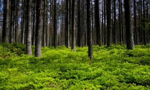 Zdjecie POLSKA / Małopolska / Tatrzański Park Narodowy / Zielony i Czarny